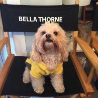 Bella Thorne's pet Kingston