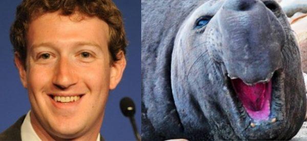 Mark Zuckerberg Sean Lion