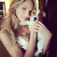 Candice Swanepoel's pet Milo Swanepoel