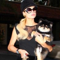 Paris Hilton's pet Baby Bear