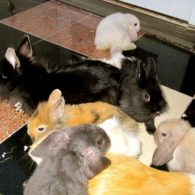 Paris Hilton's pet 20 Bunnies