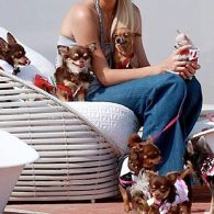 Paris Hilton's pet Prada