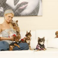 Paris Hilton's pet Dolce