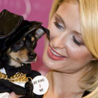 Paris Hilton's pet Dollar