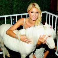 Paris Hilton's pet Lady Coco Chanel
