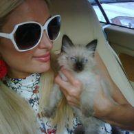 Paris Hilton's pet Princess Annabelle