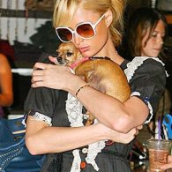 Paris Hilton's pet Tinkerbell