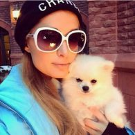 Paris Hilton's pet Prince Hilton, The Pom