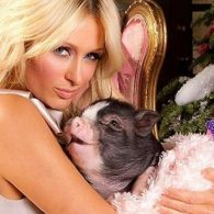 Paris Hilton's pet Princess Piglet