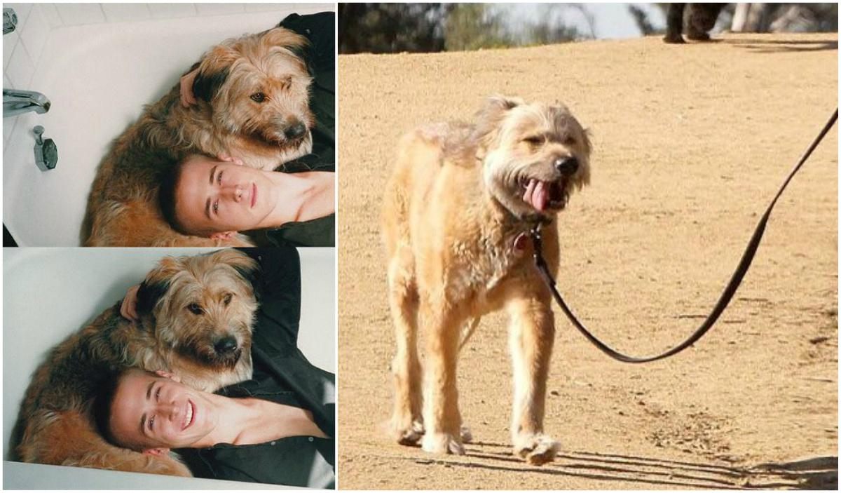 Ryan Gosling Dog George