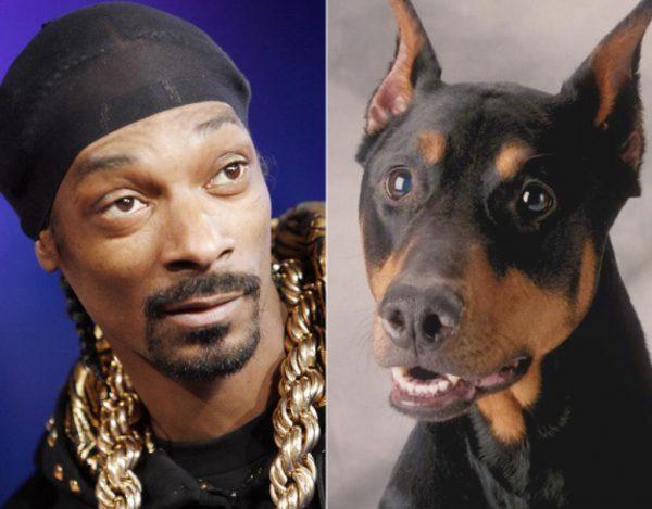 Snoop Dogg Doberman Pinscher