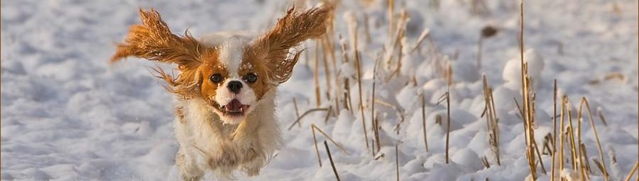 Top 5 Reasons Pets Make Winter Better