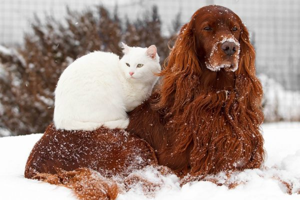 Warm Pets in the Snow
