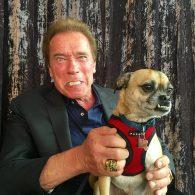 Jon Lovitz's pet Jerry Bruckheimer III