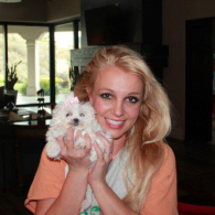 Britney Spears' pet Maltese (Spears)