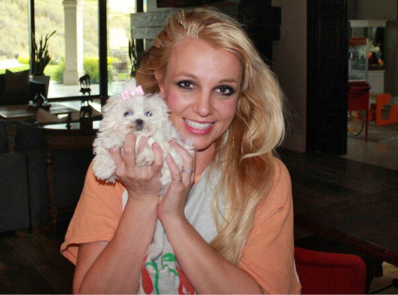 Britney Spears with her Maltese