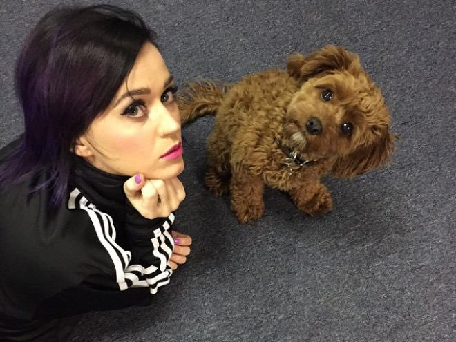 Katy Perry Pets Celebrity Pet Worth