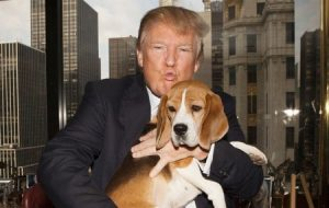 Donald Trump and a Beagle