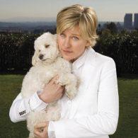 Ellen Degeneres' pet Wolf