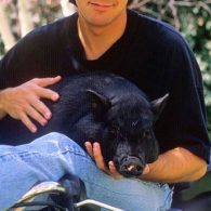 George Clooney photo with pig