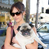 Jessica Alba's pet Sid