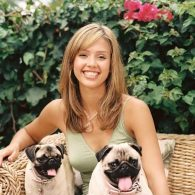 Jessica Alba and her pugs
