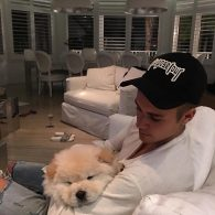 Justin Bieber's pet Todd The Stud
