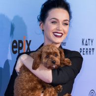 Katy Perry's pet Butters Perry