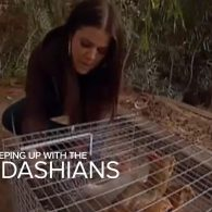 Kris Jenner's pet Chickens (Jenner)