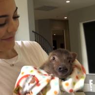 Kylie Jenner's pet Wilbur
