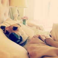 Lauren Conrad's pet Chloe