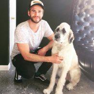 Liam Hemsworth's pet Dora