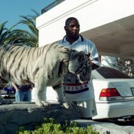 Mike Tyson's pet Kenya and Storm and a male tiger Boris