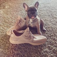 Ryan Lochte's pet Yeezy