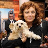 Susan Sarandon's pet Penny Lane