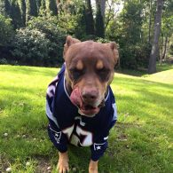 Tom Brady's pet Lua