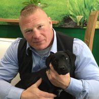 Brock Lesner's pet Black Lab (Brock Lesner)