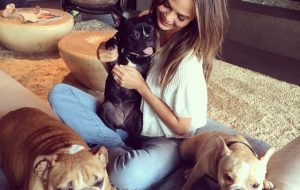 Chrissy Tiegen with her bulldogs