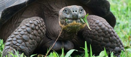 Giant Tortoise Causes $150,000 Worth of Damage to Neighbors Home