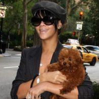 Rihanna's pet Rihanna