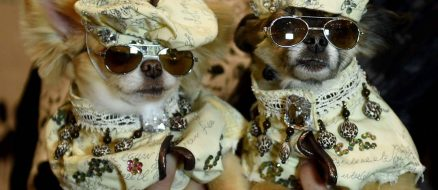 Forget New York's 2017 Fashion Week. The 14th NY Pet Fashion Show is Much More Adorable and Amazing