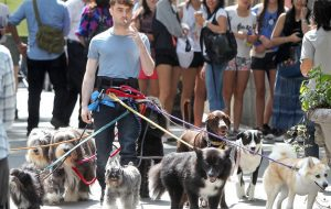 Daniel Radcliffe - New York - dogs
