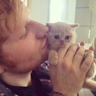Ed Sheeran's pet Graham