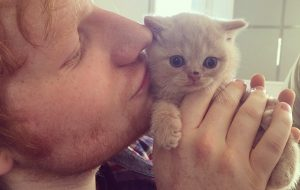 Ed Sheeran - Cat - Graham