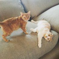 Ed Sheeran's pet Cats with girlfriend Cherry Seaborn