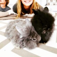 Gwyneth Paltrow's pet Rabbits