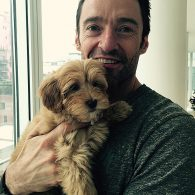 Hugh Jackman's pet Allegra