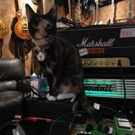 James Hetfield's pet Frankie
