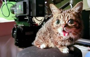 Lil Bub the 'mysterious alien woman'