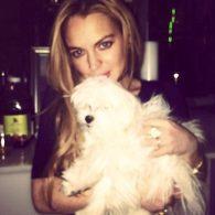 Lindsay Lohan's pet Gucci